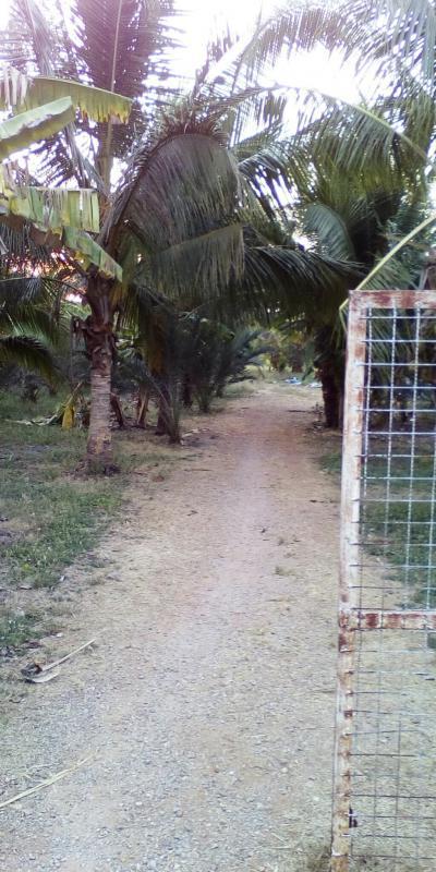 ที่ดิน 1800000 ราชบุรี บ้านโป่ง เขาขลุง